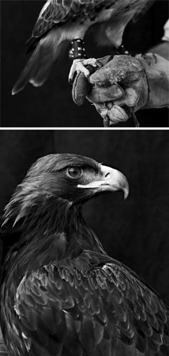 falcons_107-1 copy